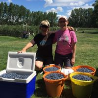 4 buckets and a cooler full of blueberries