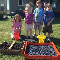 young children stand next to a tray of blueberries and black berries