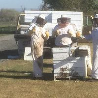3 bee keepers each give two thumbs up to the camera
