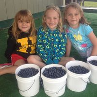 3 girls with bowls of blueberries