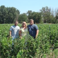 3 people stand in rows of blueberries