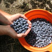 a bucket of blueberries